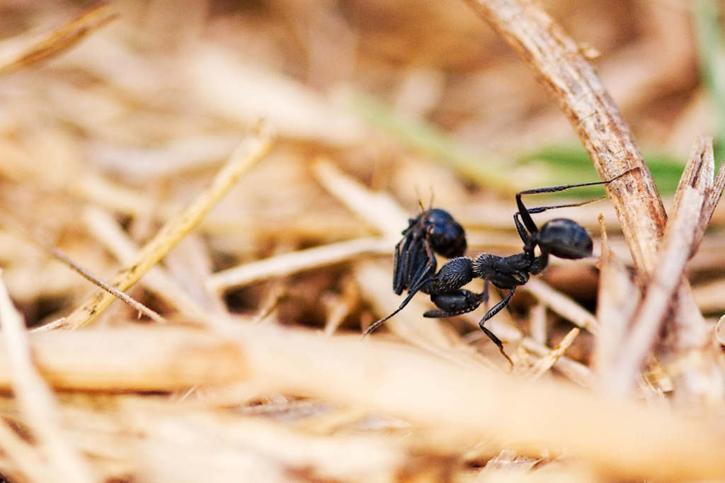 Ant Taxi